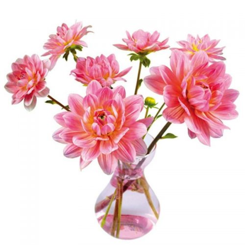 flat-flowers-originals-raamstickers-dahlia-roze (1)