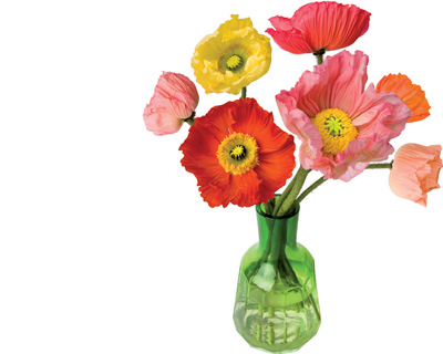 flat-flowers-poppy