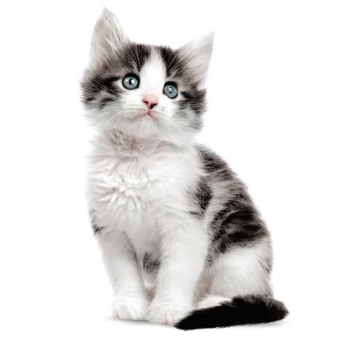 kittens-KEKamsterdam-Jack