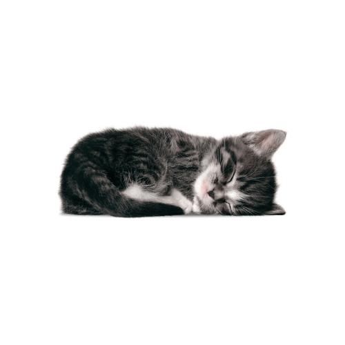 kittens-KEKamsterdam-sam