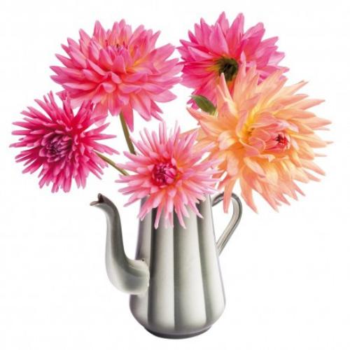flat flowers retro dahlia